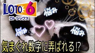 【ロト6】気まぐれ数字注意予報⁉︎ セット球&ロト6予想!