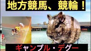 ギャンブル・デグー 第1話 地方競馬+競輪編