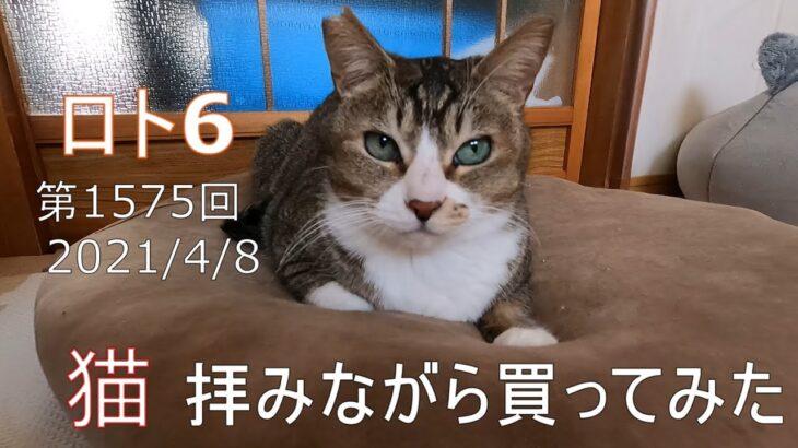 【ロト6】猫は幸運を運んでくれるのか