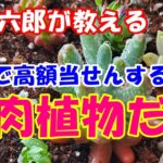 久慈六郎が教える「ロトで高額当せんするには」多肉植物だよ!