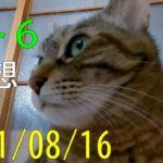 【ロト6】第1612回予想