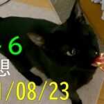 【ロト6】第1614回予想